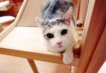 猫と暮らそう!(1)キャットルームのリフォーム