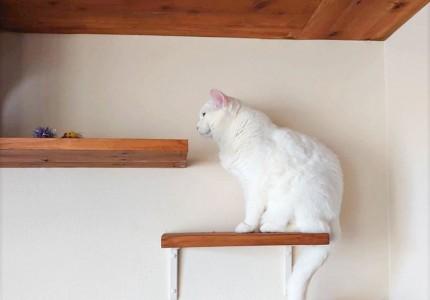 たのしく、猫と暮らす。~キャットウォーク事例ご紹介~